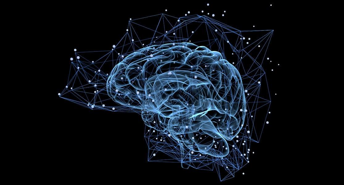 Descubre cómo funciona nuestro cerebro.