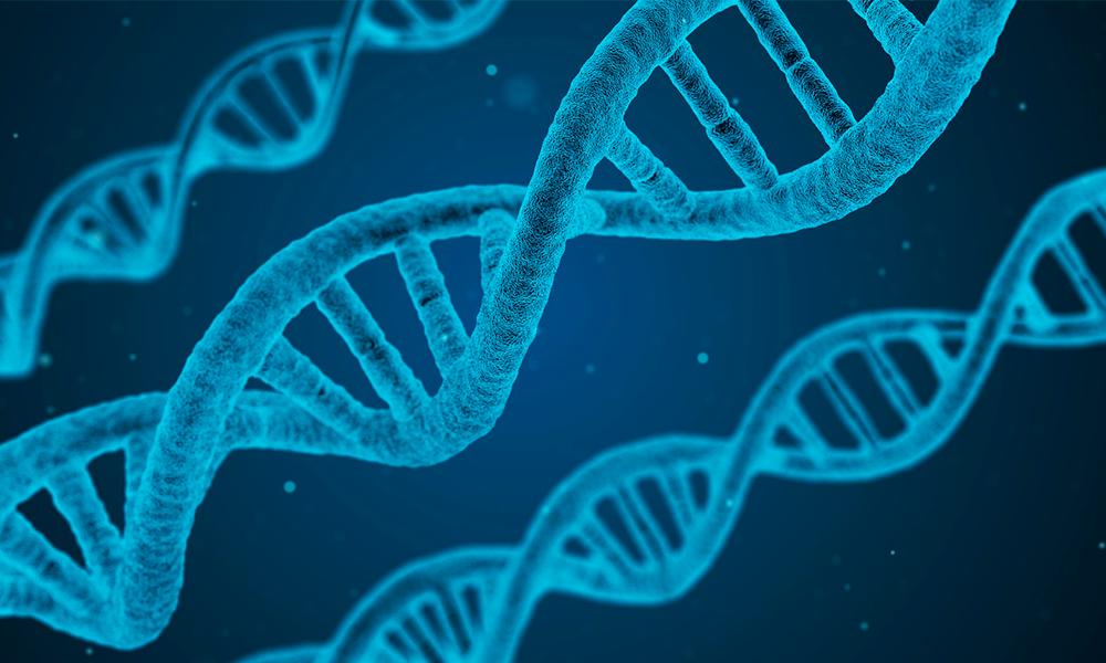 Como influye la genetica en la enfermedad de alzheimer