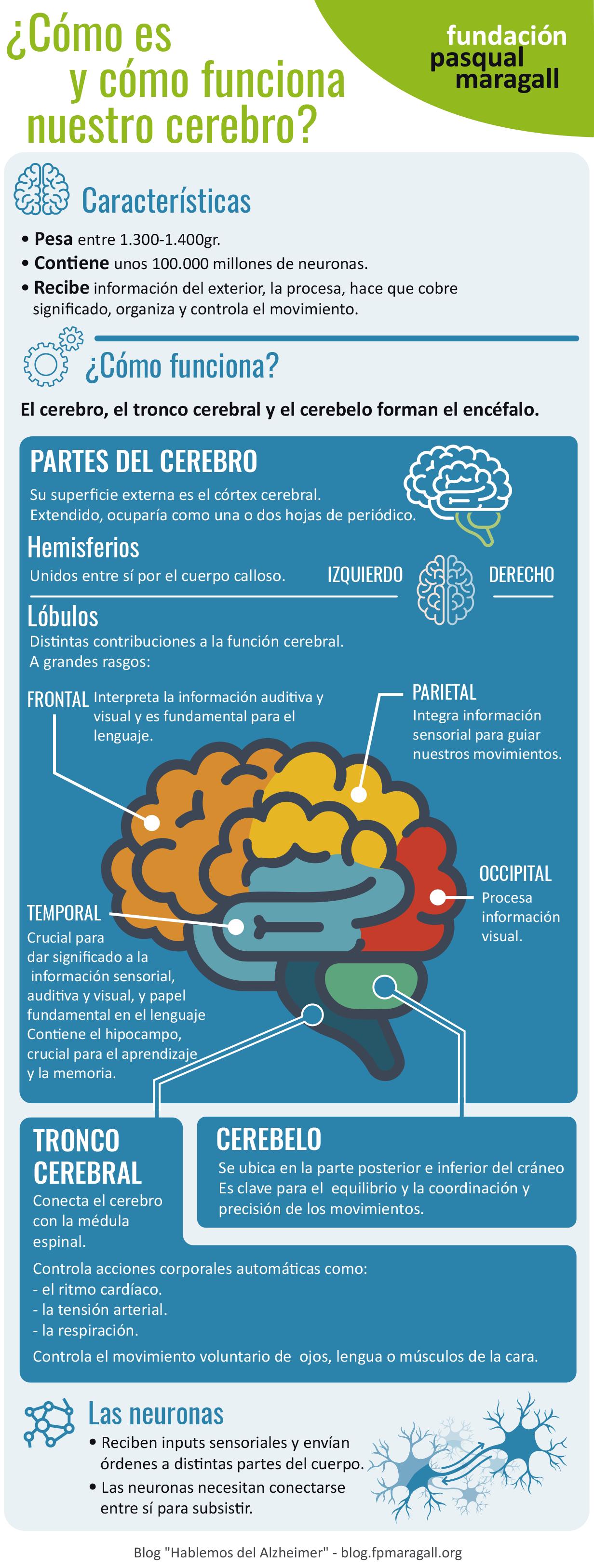Nuestro cerebro (1) (1)